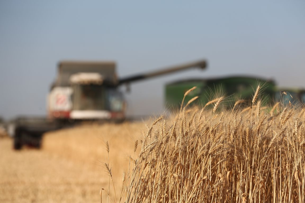 """Acros combine harvesters, manufactured by Rostselmash OJSC, during the summer wheat harvest on a farm operated by 'Svetlyi"""" Group of Companies, in Kamenka village, outside Rostov, Russia, July 5, 2019. http://gk-svetlyi.ru/"""