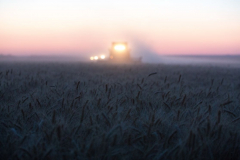 "Acros combine harvesters, manufactured by Rostselmash OJSC, during the summer wheat harvest on a farm operated by 'Svetlyi"" Group of Companies, in Kamenka village, outside Rostov, Russia, July 5, 2019. http://gk-svetlyi.ru/"