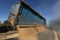 "A wheat storage. Acros combine harvesters, manufactured by Rostselmash OJSC, during the summer wheat harvest on a farm operated by 'Svetlyi"" Group of Companies, in Kamenka village, outside Rostov, Russia, July 5, 2019. http://gk-svetlyi.ru/"